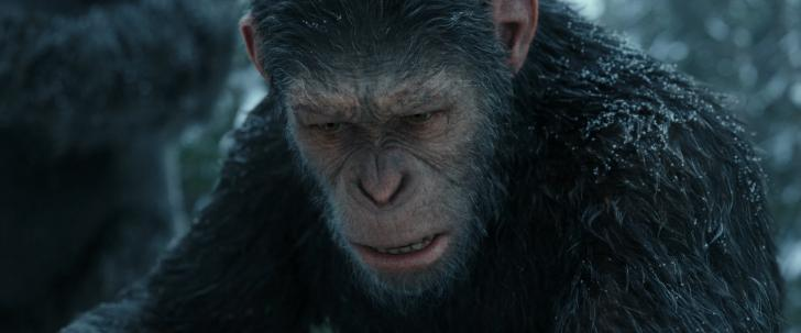 Download Torrent War for the Planet of the Apes 720p [HDRip] HDRip screen #4